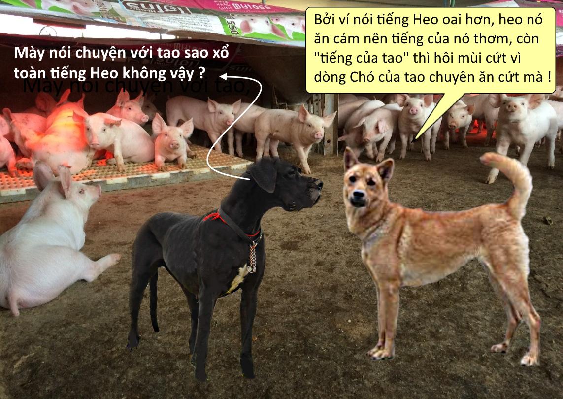 Cho-Vong-Ban.png